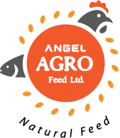 Angel Agro Feed Limited